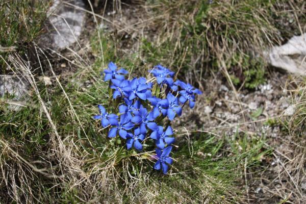 Autour du Corbier - 8 - Petites Fleurs bleues